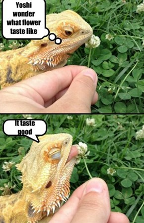 Bearded dragons love flowers