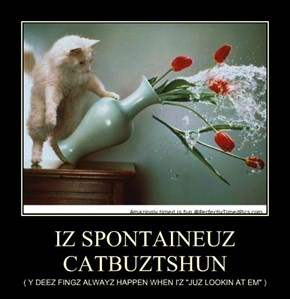 IZ SPONTAINEUZ CATBUZTSHUN