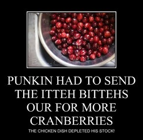 PUNKIN HAD TO SEND THE ITTEH BITTEHS OUR FOR MORE CRANBERRIES