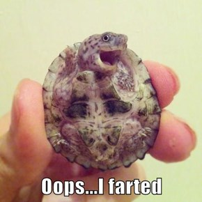 Oops...I farted