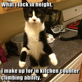 What I lack in height,  I make up for in kitchen counter climbing ability.