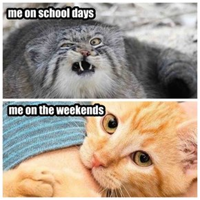 True, True...