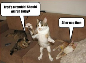 Cats Handle the Apocalypse Differently