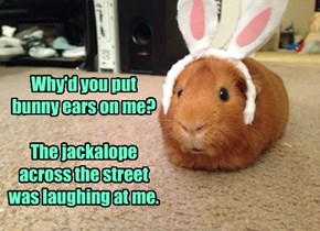 Why'd you put bunny ears on me?  The jackalope across the street was laughing at me.