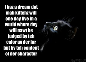 Black catz have a dream