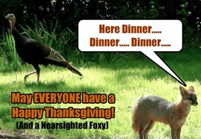 Happy Thanksgiving Whether you Get Turkey or Not!