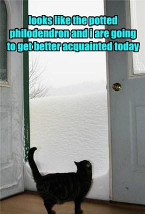 Close the Door...I'm Not That Cat