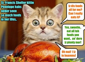 All teh animals from teh St. Francis Shelter enjoys teh wunnerful foods dat dey receives at KKPS for a super Thanksgiving Day meal..