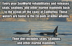 Every year SeaWorld rehabilitates and releases seals, sealions, and other marine mammils back to the ocean off the coast of California. These waters are home to the CA pods of killer whales.