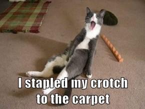 I stapled my crotch                          to the carpet