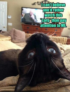 I can't believe you'd rather watch this *carp* than pay attention to ME.