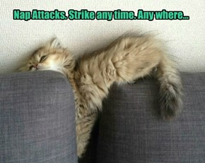 Nap Attacks. Strike any time. Any where...