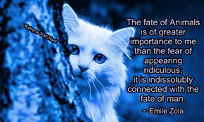 The fate of Animals is of greater  importance to me than the fear of appearing ridiculous; it is indissolubly connected with the fate of man.