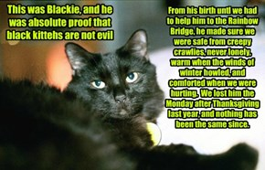 Missing out on living with a black cat because of some silly superstition is a big mistake