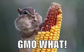 GMO WHAT!