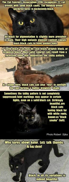 Blakc Friday 2014:  Black Cat Fun Fur Facts