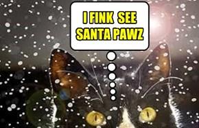 I FINK  SEE SANTA PAWZ