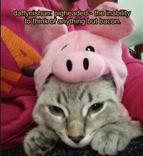 daffynishun: pigheaded - the inability  to think of anything but bacon.