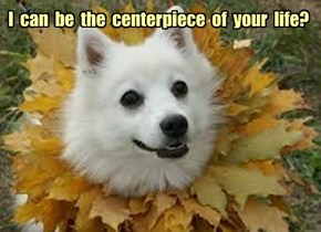 I  can  be  the  centerpiece  of  your  life?
