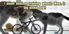 I  doant  need  no  training   wheels   Mom.  Iz  big  kitteh  now!