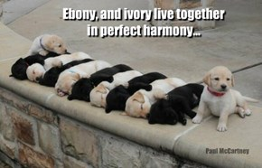 Ebony, and ivory live together in perfect harmony...