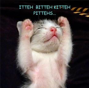 ITTEH  BITTEH KITTEH PITTEHS...