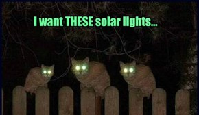 I want THESE solar lights...