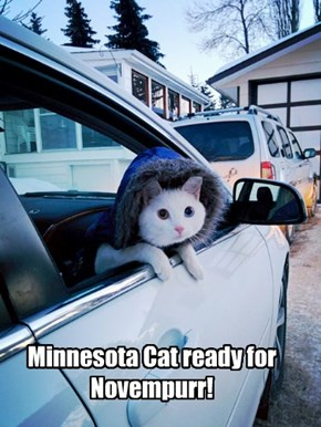 Minnesota Cat ready for Novempurr!