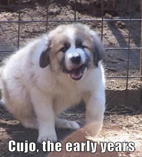 Cujo, the early years