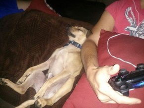 That Feeling When You're So Crap at a Game Your Dog Falls Asleep