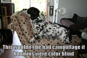 This wouldn't be bad camouflage if hoomins were color blind