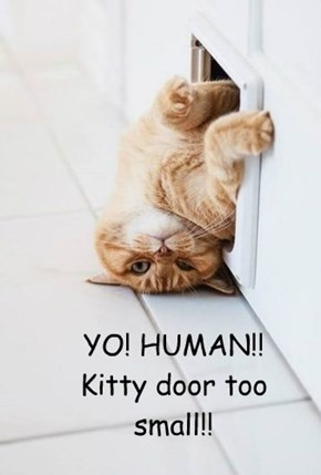 YO! HUMAN!! Kitty door too small!!