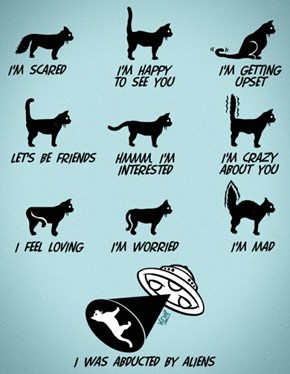 Know the Tail Your Cat's Tail is Telling