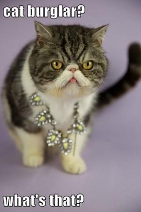 cat burglar?  what's that?