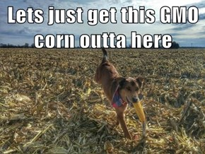 Lets just get this GMO corn outta here