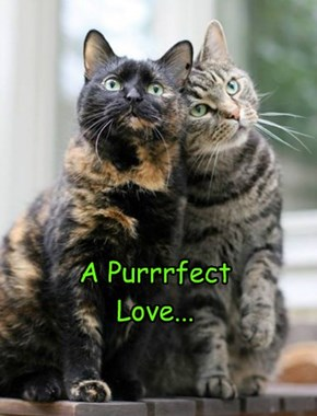 A Purrrfect Love...