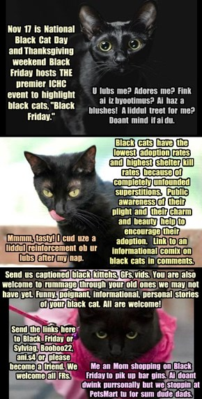 Nov 17 - 23, 2014 - Black Cat Celebration!