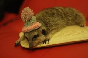 Meerkat + Hat = Meerhat
