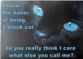 This black cat is mesmerizing