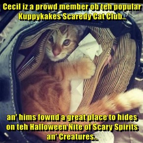 Cecil iz a prowd member ob teh popular Kuppykakes Scaredy Cat Club..  an' hims fownd a great place to hides on teh Halloween Nite of Scary Spirits an' Creatures..