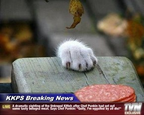 """KKPS Breaking News - A dramatic sighting of the Unknoed Kitteh after Chef Punkin had set out some tasty bologna meat. Says Chef Punkin: """"Golly, I'm eggsited by all dis!"""""""