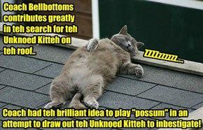 Coach Bellbottoms iz bery hard at work in teh search for teh Unknown Kittie..