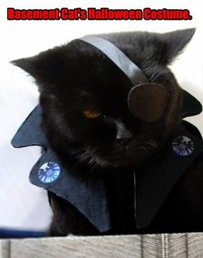 Basement Cat's Halloween Costume.
