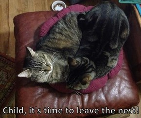 Child, it's time to leave the nest!