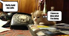 Fluffy, hold my calls