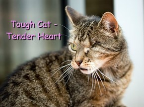 Tough Cat - Tender Heart