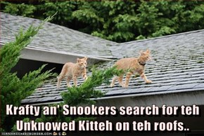 Krafty an' Snookers search for teh Unknowed Kitteh on teh roofs..