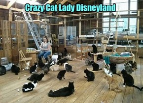 Crazy Cat Lady Disneyland