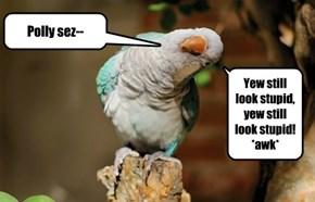 Bird haz the word!
