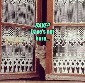 DAVE? Dave's not here...